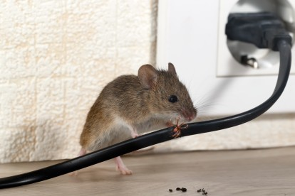 Pest Control in Brixton, SW2. Call Now! 020 8166 9746