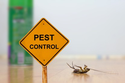 Pest Contol in Brixton, SW2. Call Now 020 8166 9746